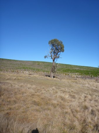 Oberon, Australia: photo9.jpg