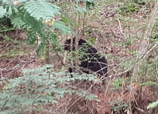 Zoders Inn & Suites: Bear as photographed from my wood side balcony