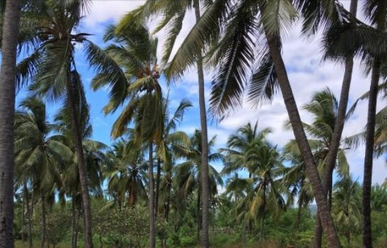 Moroni, Comoros: Such a nice day