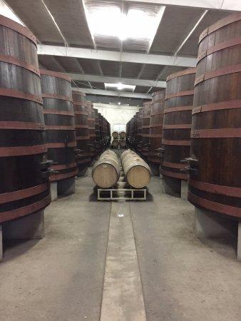 Valle de Guadalupe, Messico: Wine Storage 2