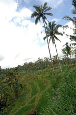 Kerobokan, Indonesien: atv