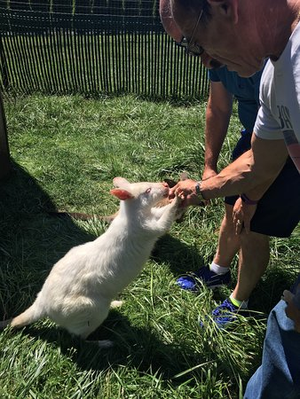 Fall City, WA: Fantastic opportunity to interact with the animals