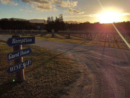 Carriages Boutique Hotel & Vineyard: A perfect sunset over the vineyard walk....