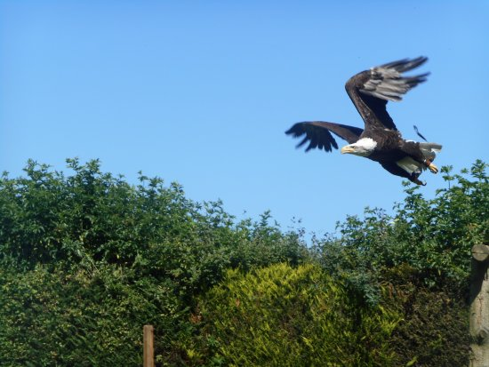 Ringwood, UK: Liberty in flight