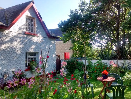 Cape Clear Island, Irlanda: Lovely garden surrounded by scented flowers of all sorts, enjoyed a lovely scone a coffee there
