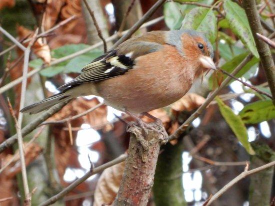Frankby, UK: bird.