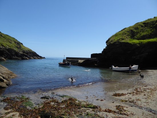 Portloe, UK: Dogs enjoying the water