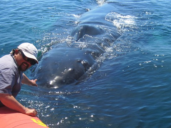 "Tiverton, Kanada: Biologist - owner Tom Goodwin - ""whale whisperer"""