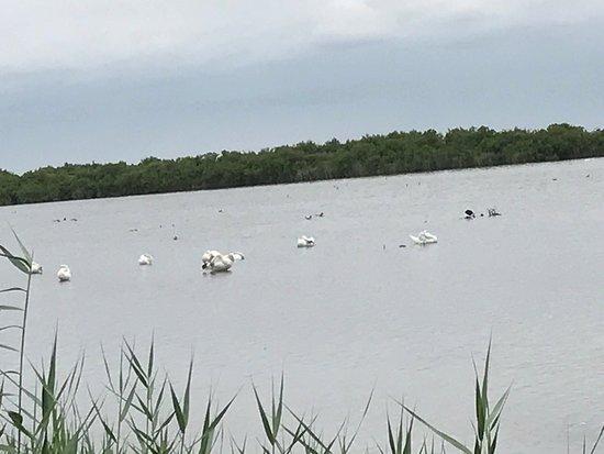 Le Teich, Frankreich: photo1.jpg
