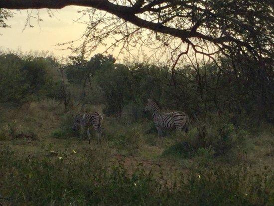 Komatipoort, South Africa: Belas zebras