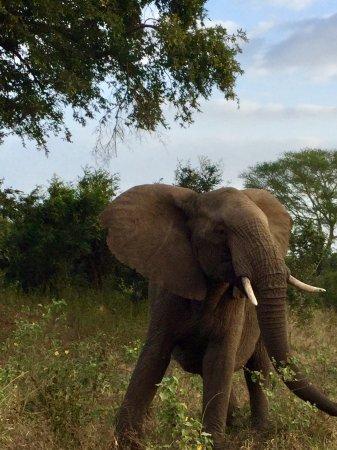 Komatipoort, South Africa: De frente para foto