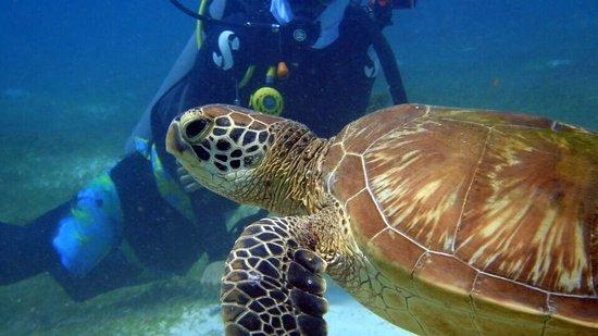 Lapu Lapu, Filipinas: Dive Lab