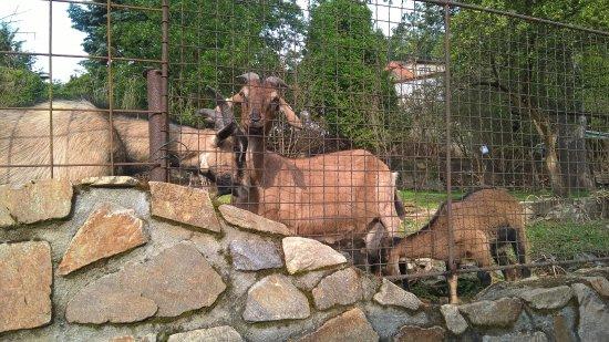 Penzion Delanta : Szomszéd