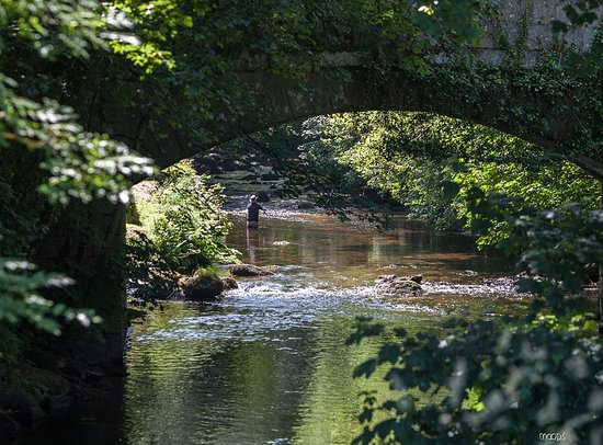 Chagford, UK: The River Teign - stones throw from the pub. Great walks long walks up/down the banks.