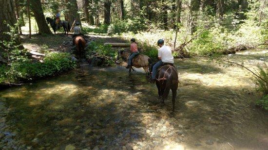 Fish Camp, CA: Crossing water.