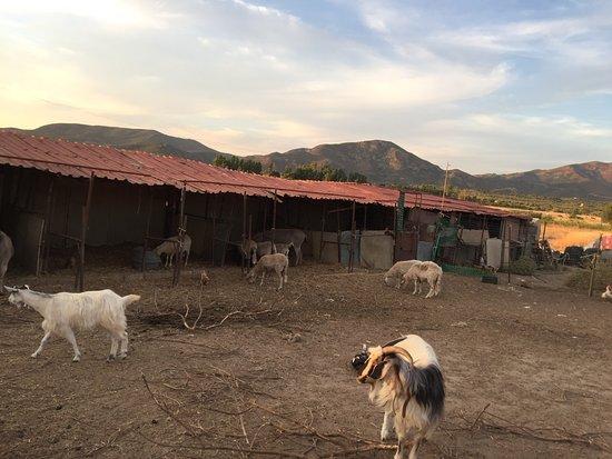 Serdiana, อิตาลี: Animali dell agriturismo