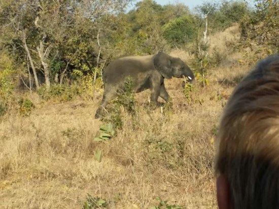 Timbavati Private Nature Reserve, Sydafrika: IMG-20170622-WA0025_large.jpg