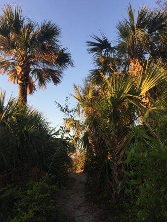 Villamare Villas Resort at Palmetto Dunes: the secret beach path, right outside your door
