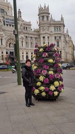Plaza de Cibeles : Красивые цветочки на площади
