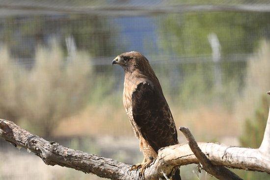 Kamloops Wildlife Park: photo8.jpg