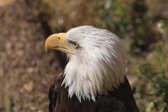 Kamloops Wildlife Park: photo9.jpg