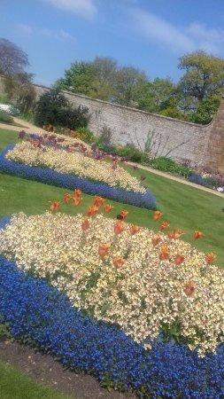 Daventry, UK: Beautiful Flowers