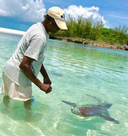 Treasure Cay, Great Abaco Island: Captain Major feeding a shark and explaining their origin and habits.