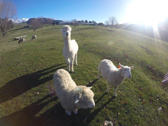 Wanaka, Nowa Zelandia: photo0.jpg