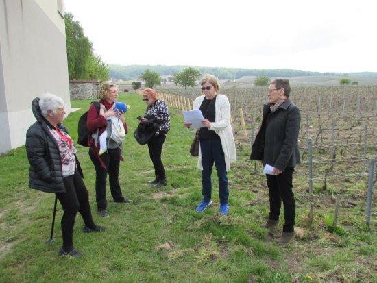 Marne, France: vineyard in Ludes