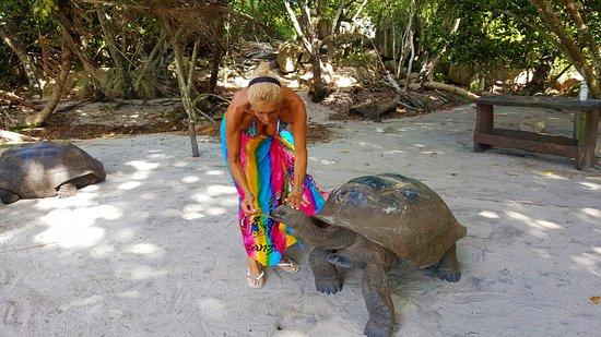 جزيرة براسلين, سيشيل: tartarughe in liberta'