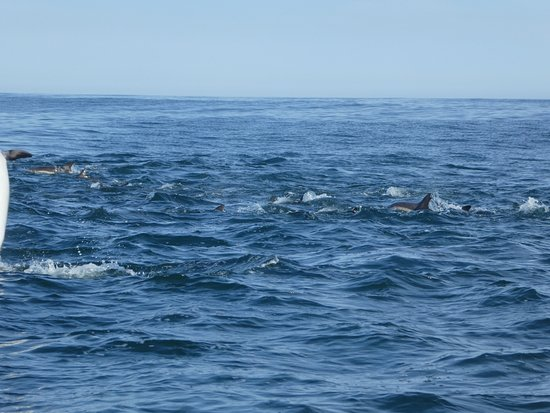 Gansbaai, Sudáfrica: Dolphins on way back from shark dive site