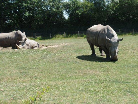 Hermival-les-Vaux, Frankrijk: les rhinos