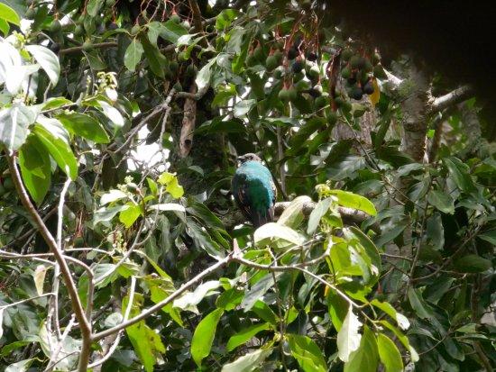 San Gerardo de Dota, Коста-Рика: trogon