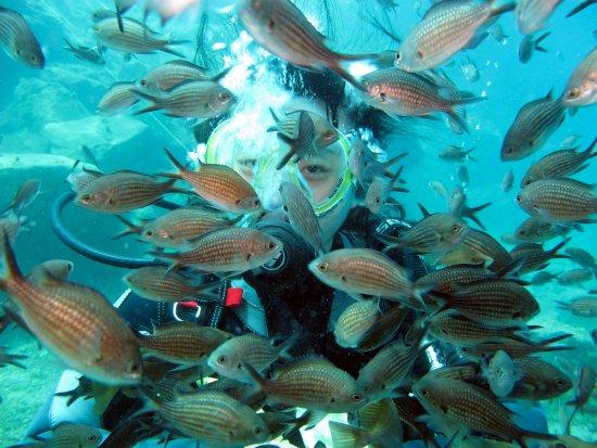 Atlantis Oia Dive Centre