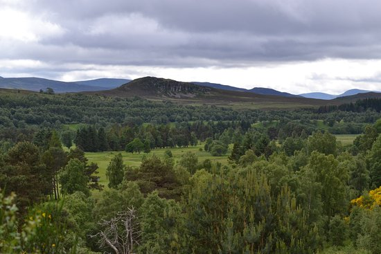 Newtonmore, UK: A view from the top of the path through the pines
