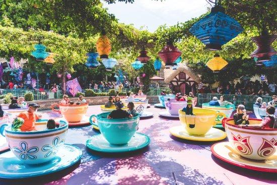Teacups (262911957)