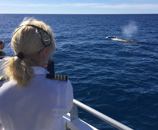 Redcliffe, Australia: 24/6/2017 Had An Amazing Day On The Water, so many whales was fantastic. Crew are wonderful, fri