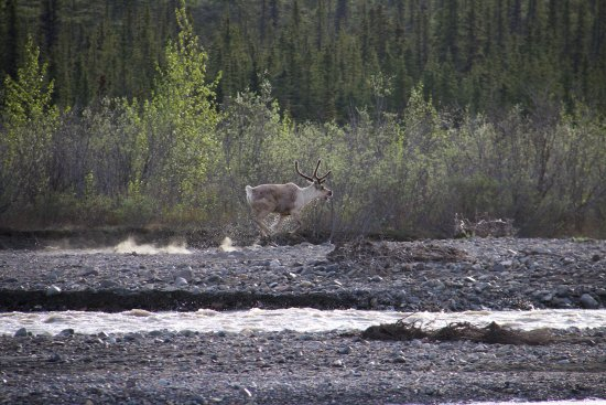 Teklanika River Prices Amp Campground Reviews Denali