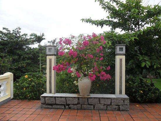Victoria Hoi An Beach Resort & Spa: Huge numbers of pots of beautiful bougainvillea