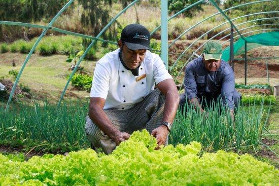 Malolo Lailai Island, Fiji: Farm
