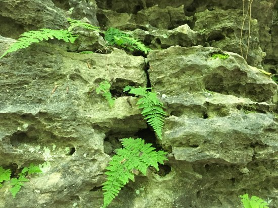 Clifty Falls State Park: photo1.jpg