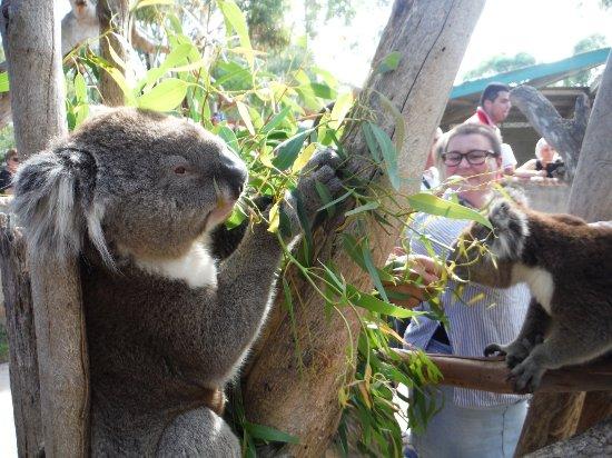 Victor Harbour, Australien: Urimbirra Wildlife Park.