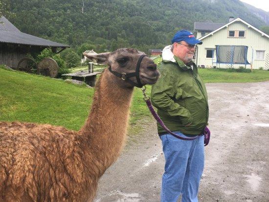 Skjolden, Norway: My husband and his compatible llama
