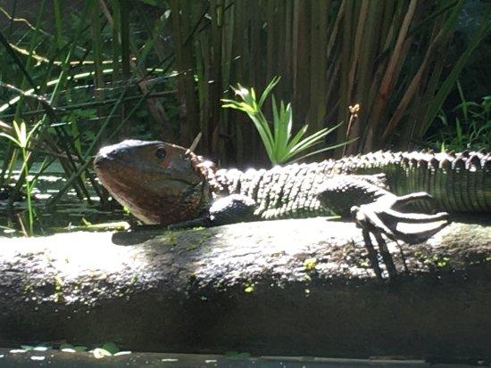 Dominical, Kosta Rika: photo4.jpg