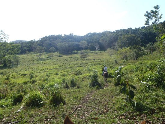 Mountain Equestrian Trails : View from horseback