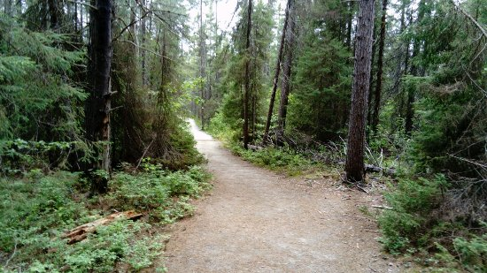 Spruce Bog Boardwalk Trail