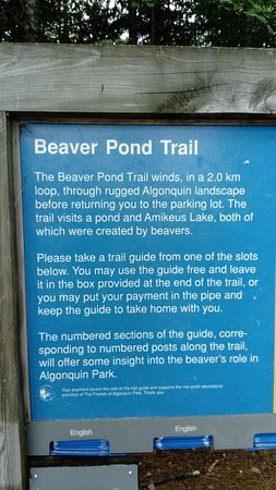 Парк Алгонкин, Канада: Beaver Pond Trail