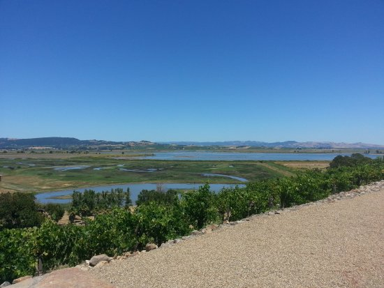 Viansa Winery and Italian Marketplace: View of the wetlands and Sonoma valley