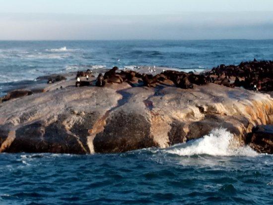 Ciudad del Cabo, Sudáfrica: Seals on Seal Island (off Hout Bay)