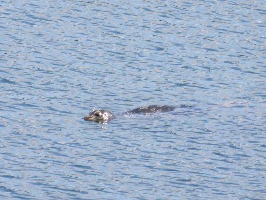 Keyport, WA: Cute seal just visiting! 🙂